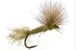 SPARKLE DUN & THORAX FLIES